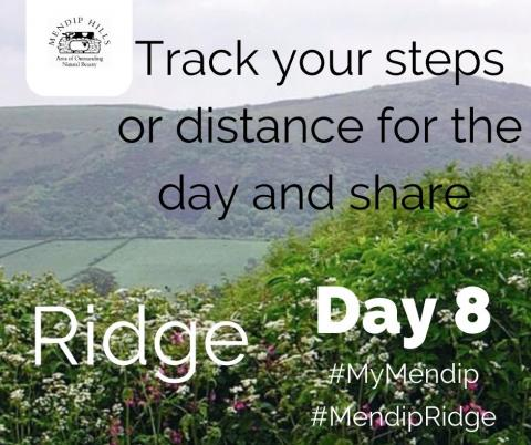 Track your steps or distance for the day