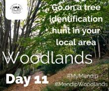 Go on a tree identification hunt in your local area