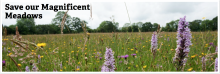 Somerset Wildlife Trust – Save our Magnificent meadows